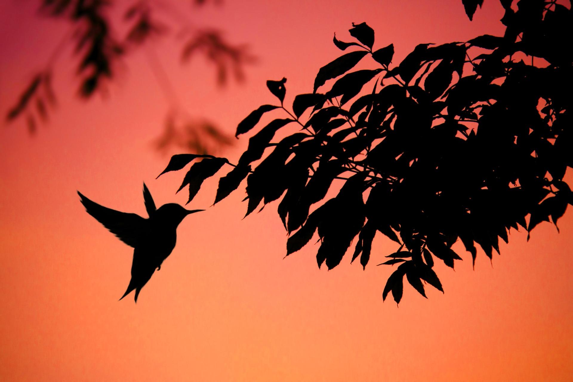hummingbird-3496519_1920